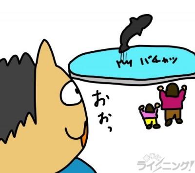 イルカのトレーニングは見れる