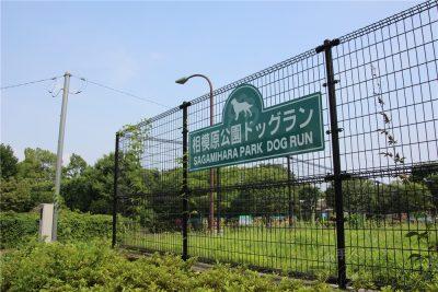 相模原麻溝公園-追撮 (229)