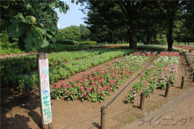 相模原麻溝公園-追撮 (205)